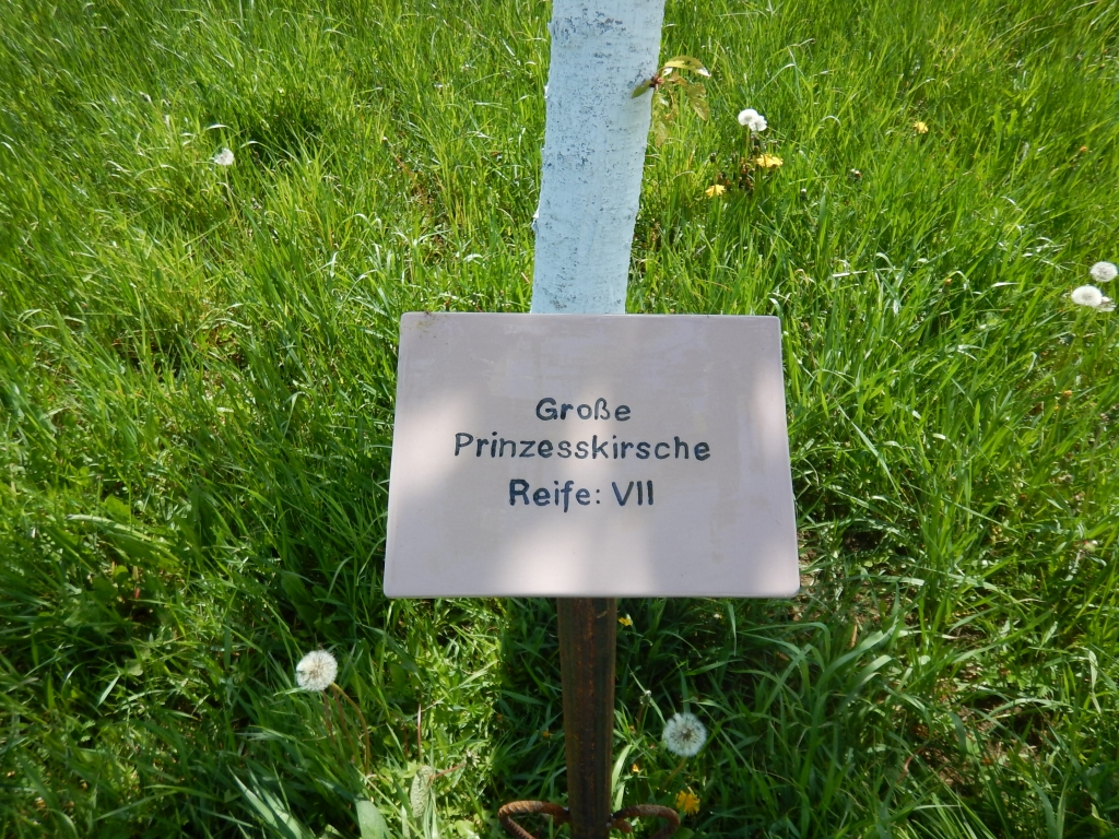 namenschild-kirschallee-ollersdorf-ivancsics